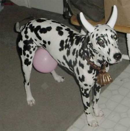 Halloween Dog Cow Costume Really Funny Pictures