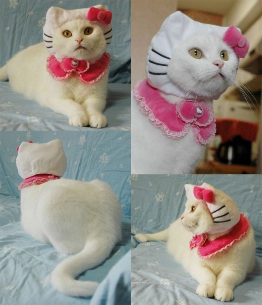 cat in hello kitty costume. Hello kitty cat costume · View pic in full size