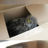 Owl from a box