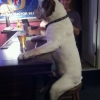 Dog in a pub