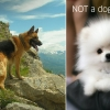 Dog vs. not a dog