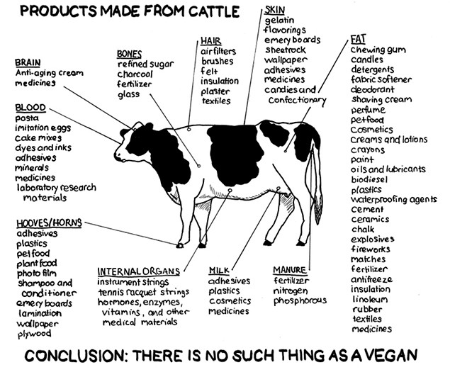 [Image: products-made-from-cattle-big.jpg]