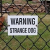 Warning - strange dog