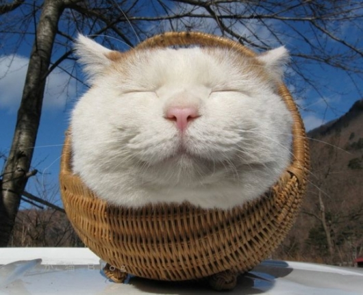 cat in a basket   really funny pictures collection on picshag