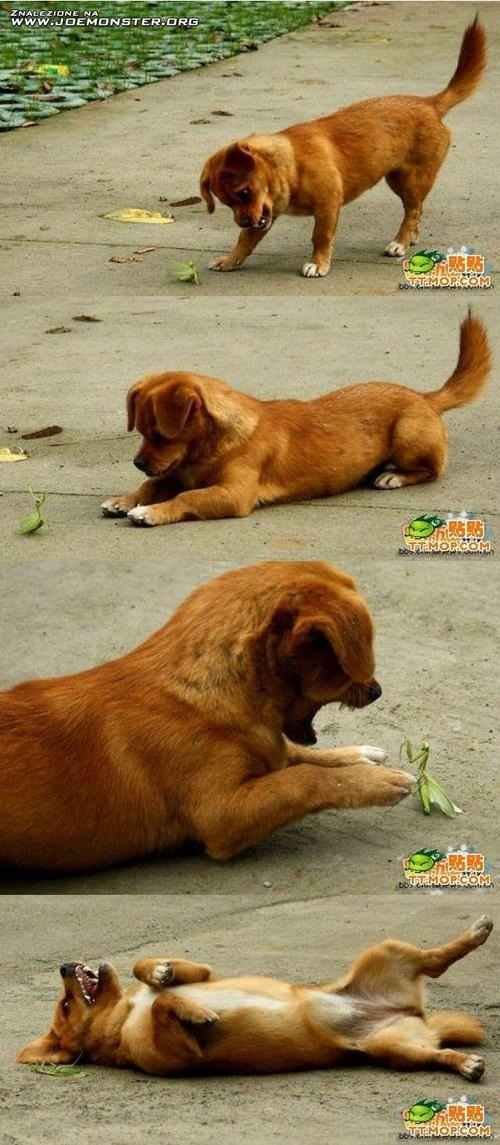 Dog and mantis friends
