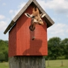 Giraffe in a birdhouse
