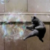 Soap bubble vs ninja cat