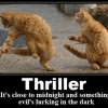 Thriller cats