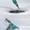 Bird ice fishing