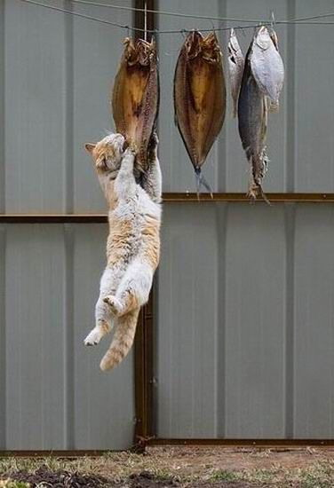Cat hanging by a fish