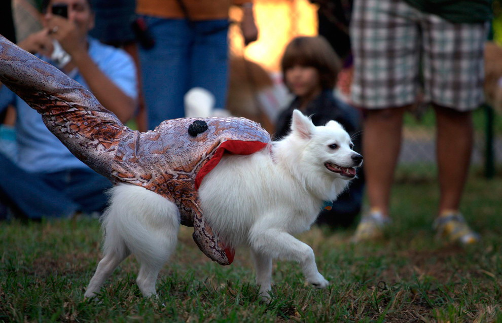 Snake eating dog costume & Snake eating dog costume - Really funny pictures collection on ...