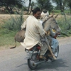 Donkey transportation