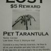 Lost pet tarantula