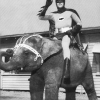 Batman with his elephant