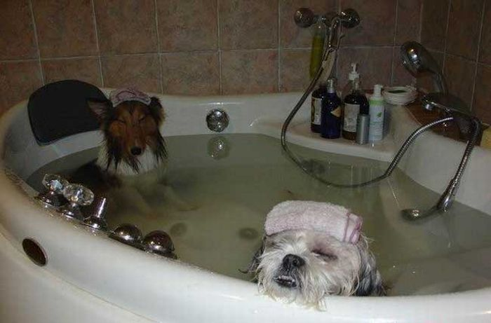 Dogs relaxing - Really funny pictures collection on picshag.com Relaxing Dogs