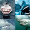 Sharks with human teeth