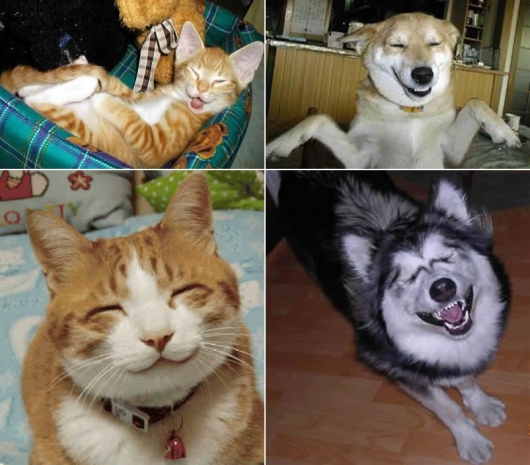 Smiling pets