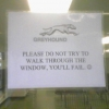 Greyhound window sign