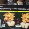 Aggressively forward bearded iris