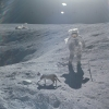 Cat spotted on moon