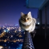 Cat has no fear of heights