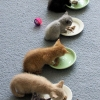 Feeding the kittens