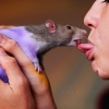 French-kissing a mouse